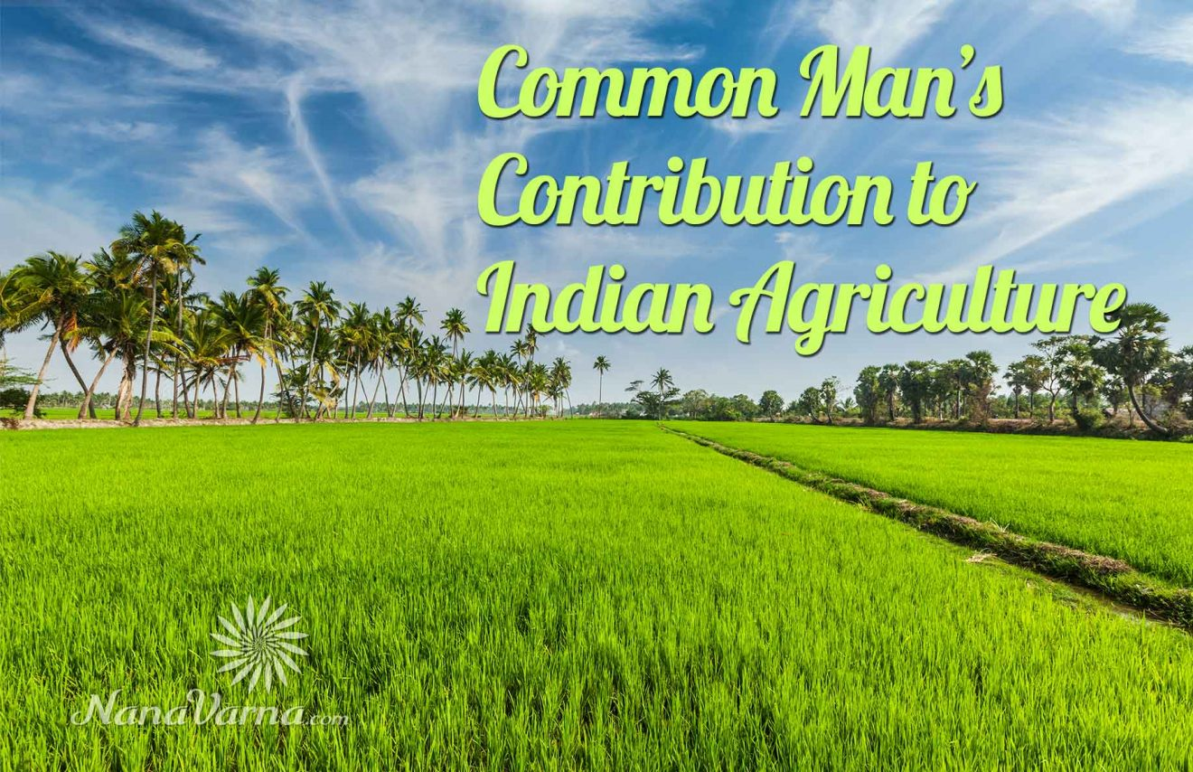 contribute to improve indian agriculture