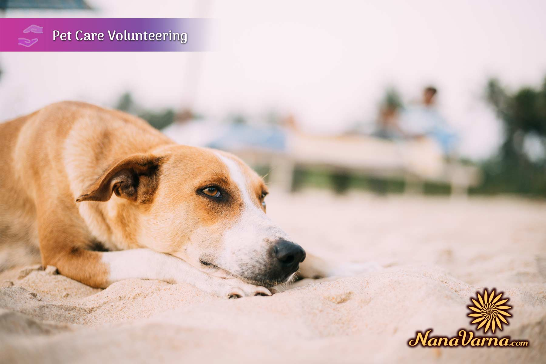 Online Volunteering In India 10