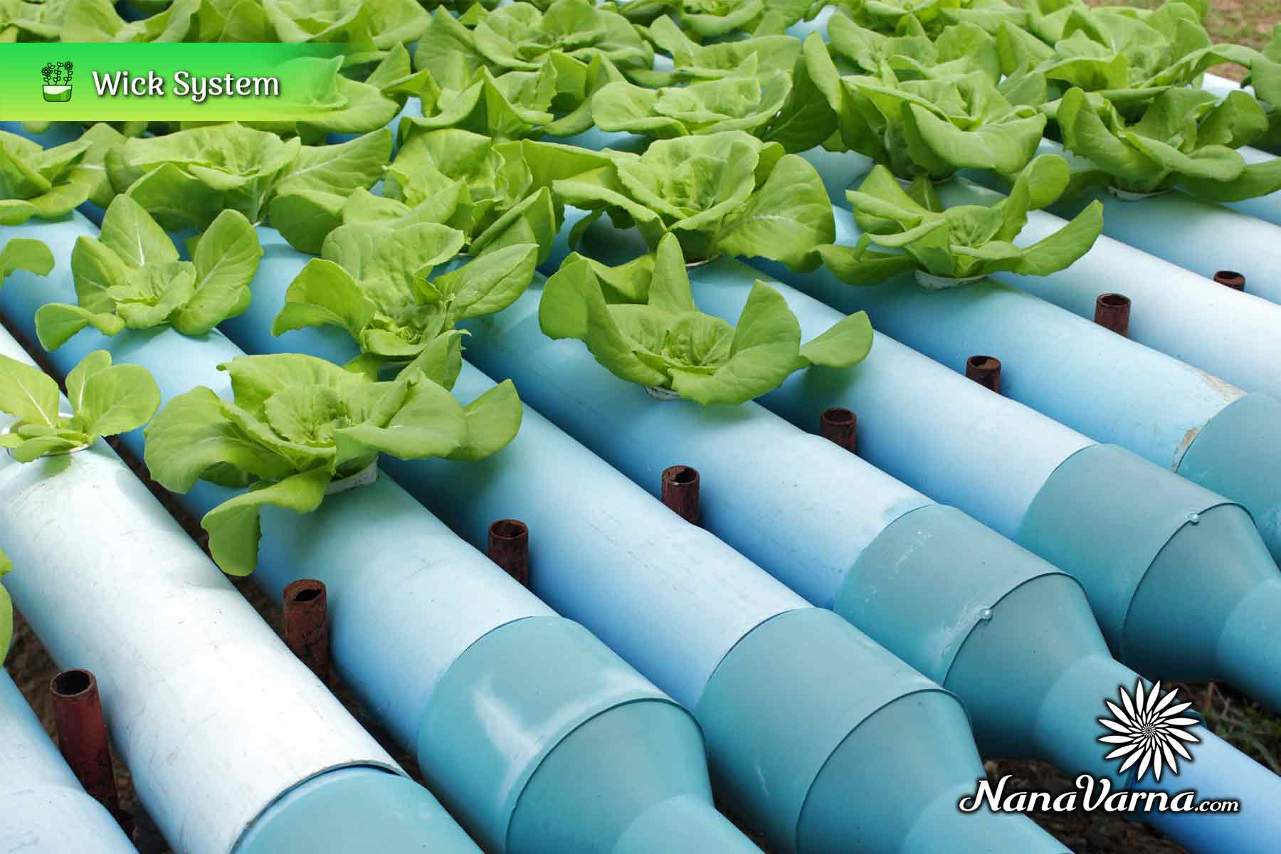 hydroponic garden system 10